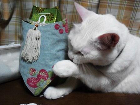 ラル一周忌・変わらぬ想いと信じる心_b0181027_20132456.jpg