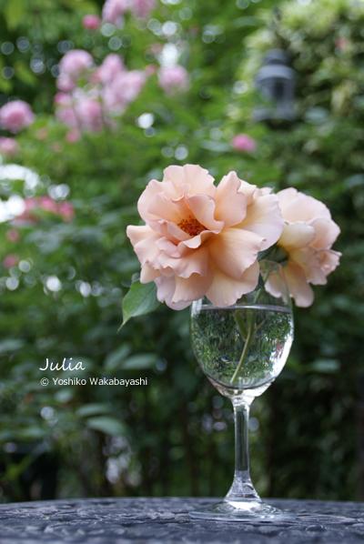 Rose 2012_d0107929_11404121.jpg