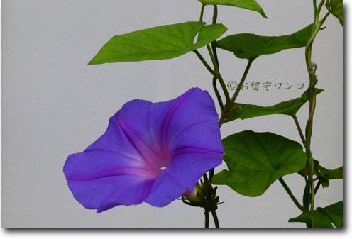 f0111147_13575040.jpg