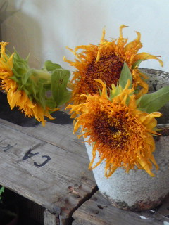 ゴッホの向日葵。。。_a0229658_13294229.jpg