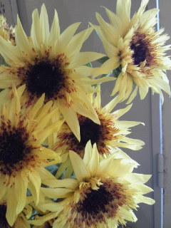ゴッホの向日葵。。。_a0229658_13374322.jpg
