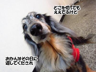 d0020869_16153218.jpg
