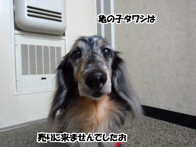 d0020869_1671477.jpg