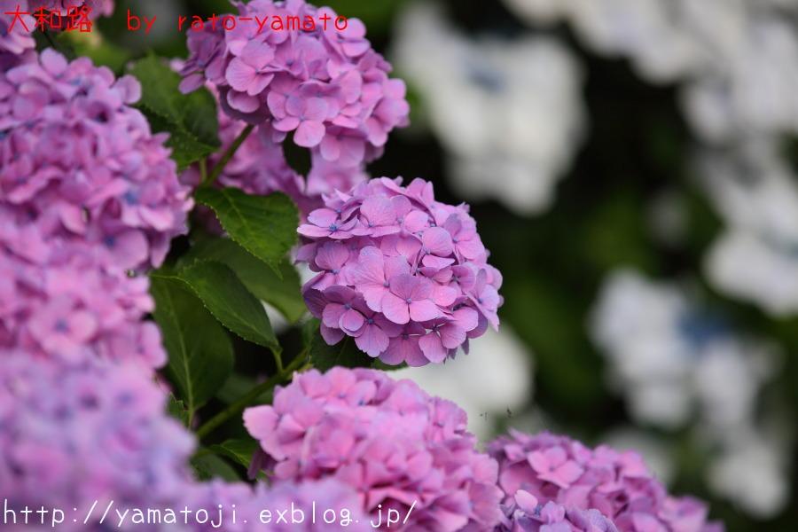 f0236776_2132974.jpg