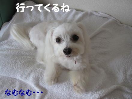 b0193480_163507.jpg