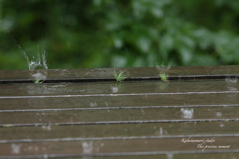 雨の休日軒先で_c0137403_1532193.jpg
