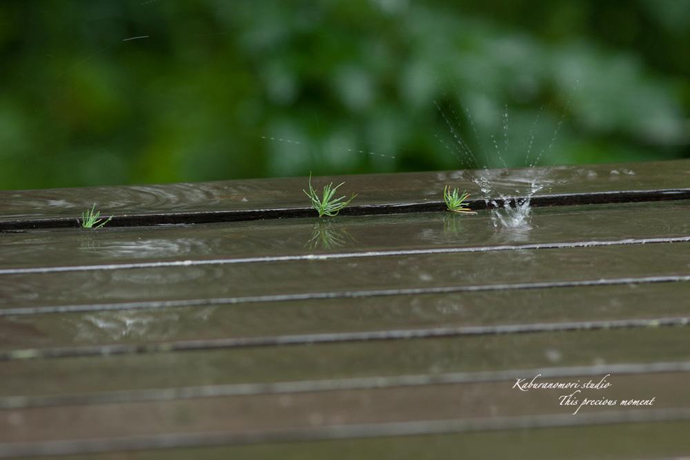 雨の休日軒先で_c0137403_15345384.jpg