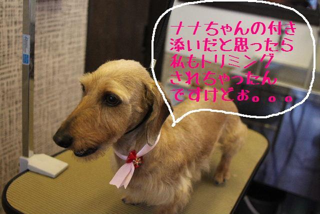 おはよぉ~ございまぁ~!!_b0130018_7472114.jpg