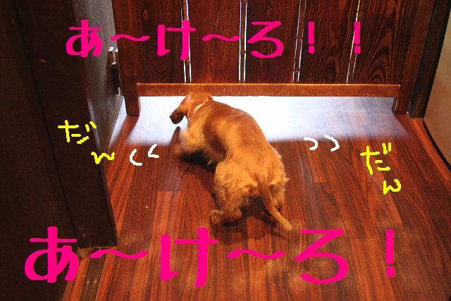 おはよぉ~ございまぁ~!!_b0130018_7475254.jpg