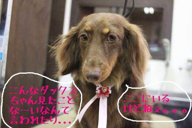 おはよぉ~ございまぁ~!!_b0130018_7514970.jpg