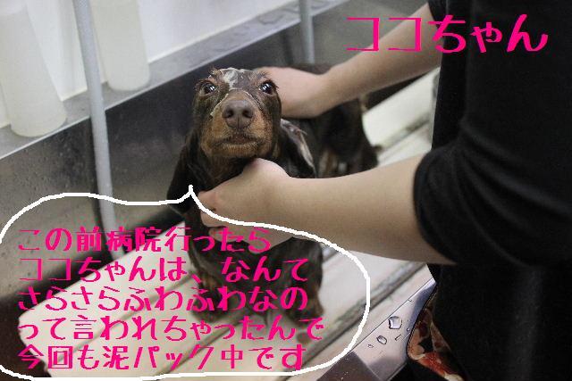 おはよぉ~ございまぁ~!!_b0130018_751740.jpg