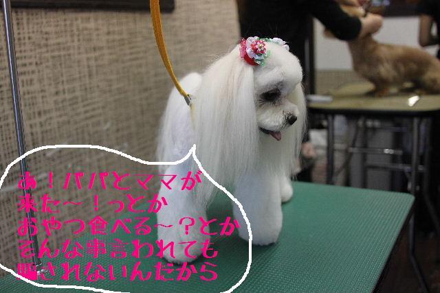 おはよぉ~ございまぁ~!!_b0130018_7533456.jpg