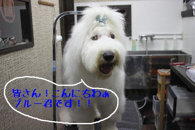 おはよぉ~ございまぁ~!!_b0130018_7552277.jpg