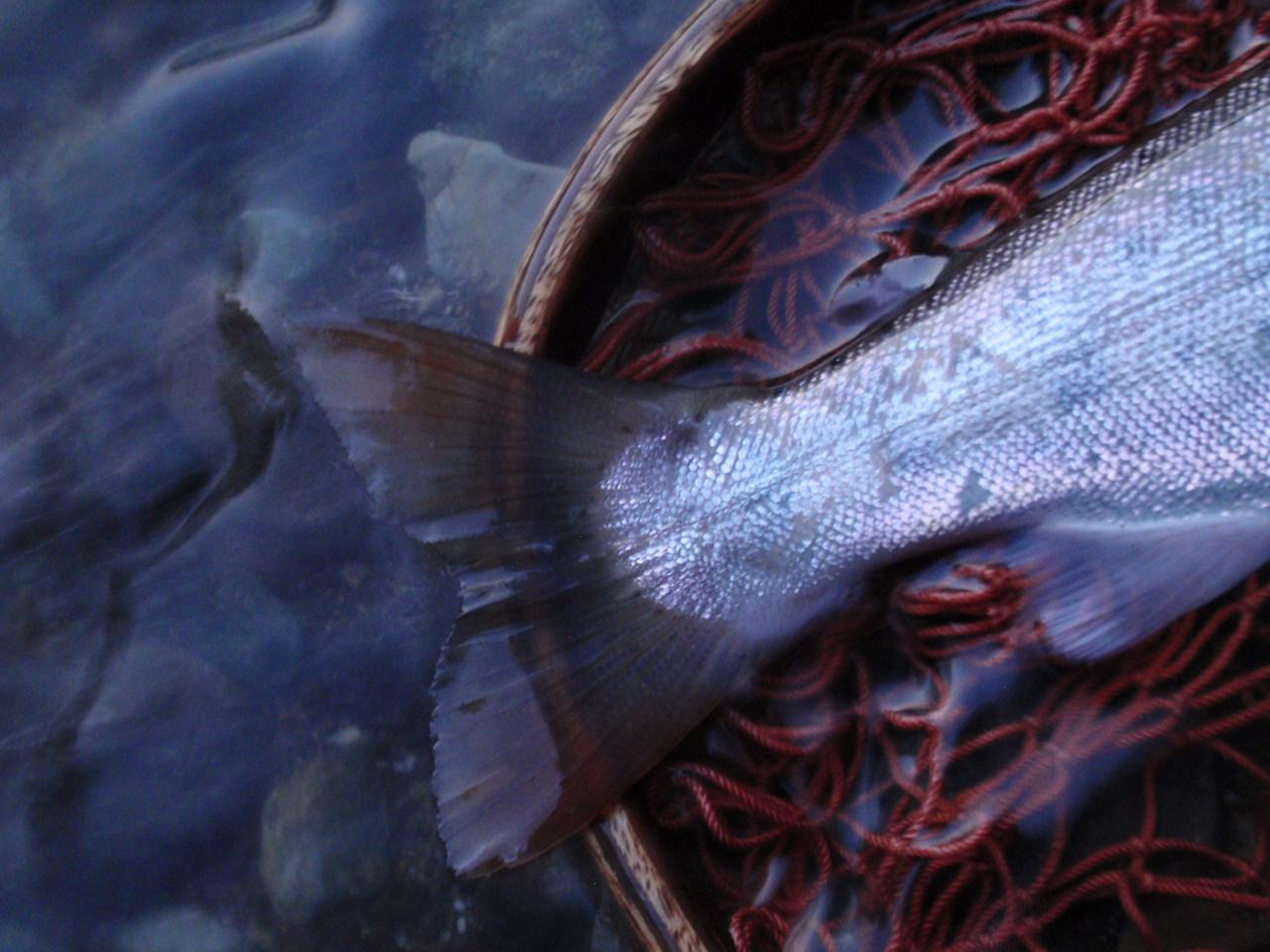 ・Fishing Diary_a0165135_20331033.jpg