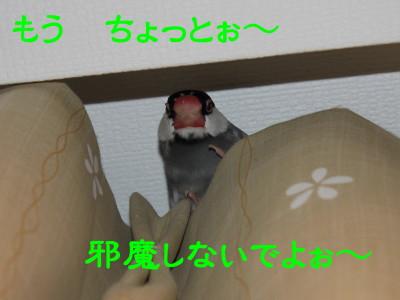 b0158061_22502745.jpg