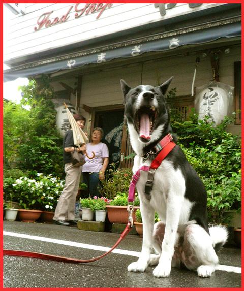 入谷・「朝顔市」へ。入谷の夏、日本の夏。_e0236072_22155659.jpg
