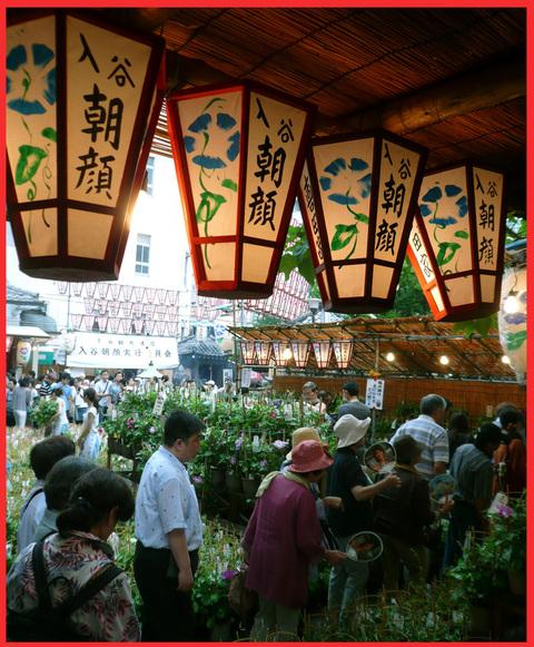 入谷・「朝顔市」へ。入谷の夏、日本の夏。_e0236072_22212896.jpg