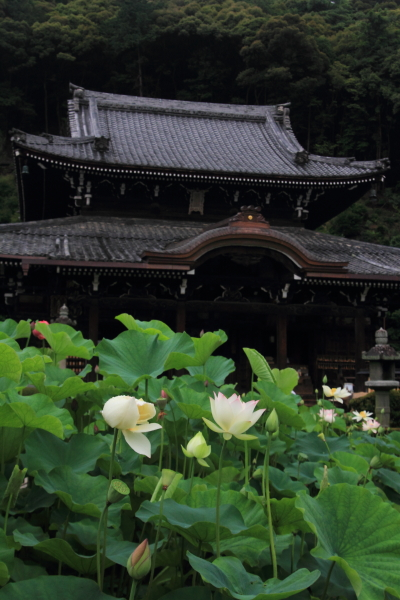 三室戸寺_e0051888_2132911.jpg