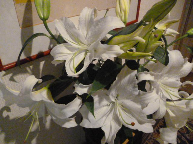 7月の誕生花は・・・_b0210699_0472785.jpg