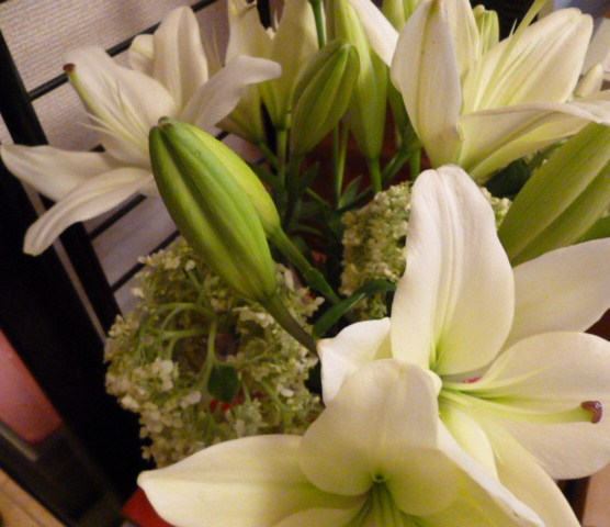 7月の誕生花は・・・_b0210699_0585353.jpg