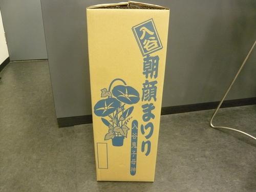 DTジュラルミンニップル新色&入谷朝顔祭り_a0262093_113274.jpg