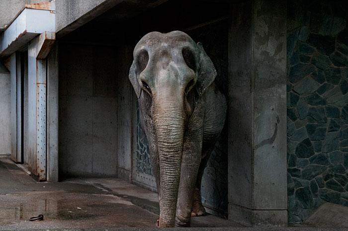 記憶の残像-327 東京都 武蔵野市 井の頭動物園_f0215695_15243897.jpg