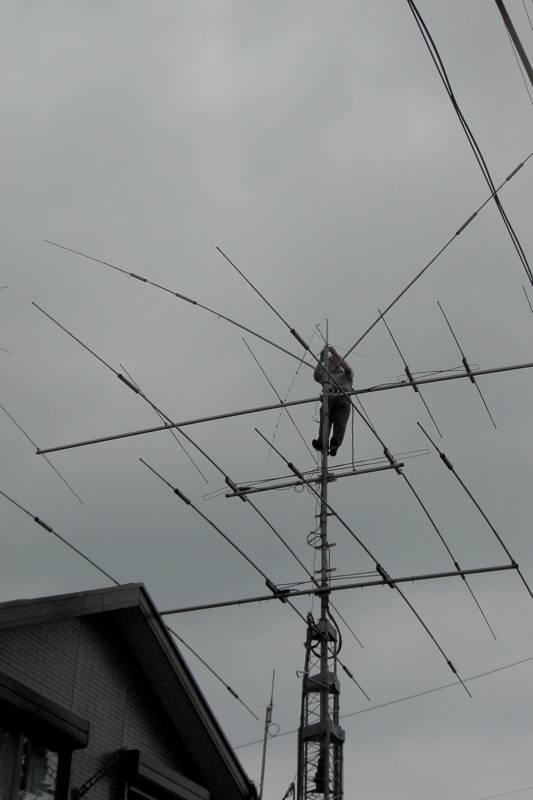 カワセミ若鳥のバトル/HAM用アンテナ修理_b0024798_17574236.jpg