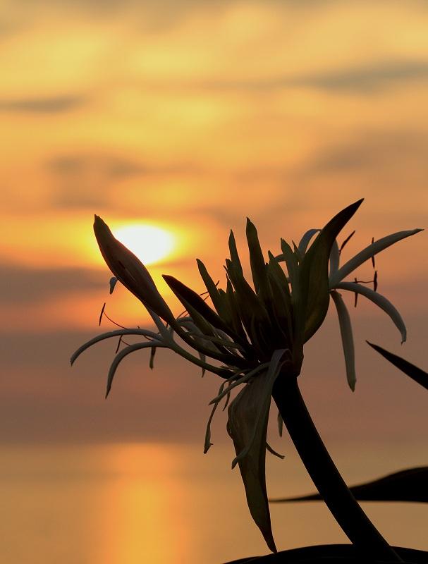 土井ヶ浜の夕陽_d0074828_2202469.jpg