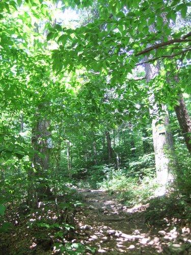 キャンプ2日目 淋しいキャンプグランド_c0064534_13332361.jpg