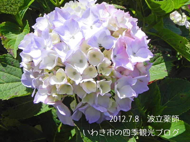 f0105342_15544818.jpg