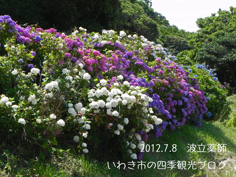 f0105342_15551063.jpg