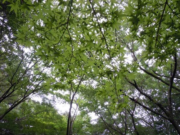梅雨の合間のウオーキング_d0227044_22505937.jpg