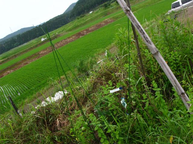 さらにツビオ菜園_c0039145_225260.jpg