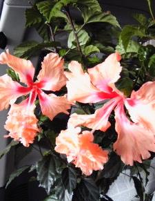 フラミンゴ。。。_a0229658_9402746.jpg