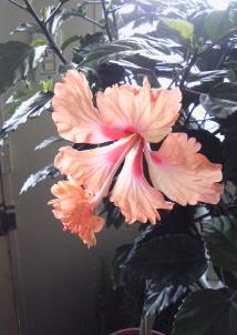 フラミンゴ。。。_a0229658_9501456.jpg