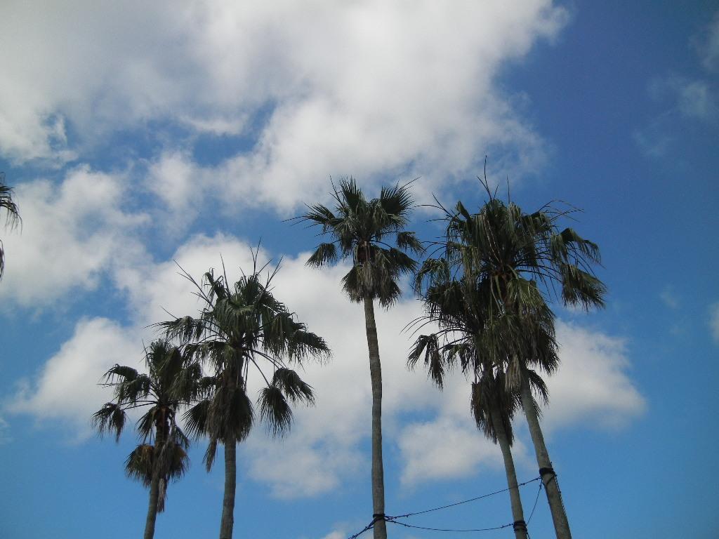 '12,7,9(月)真夏の青い空と水彩画教室!_f0060461_12592753.jpg