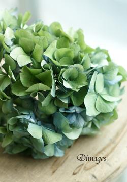 グリーンの紫陽花♪_d0167088_1414238.jpg