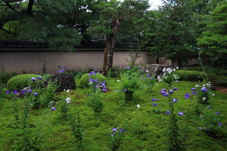 天得院(東福寺塔頭)_e0051888_2002972.jpg