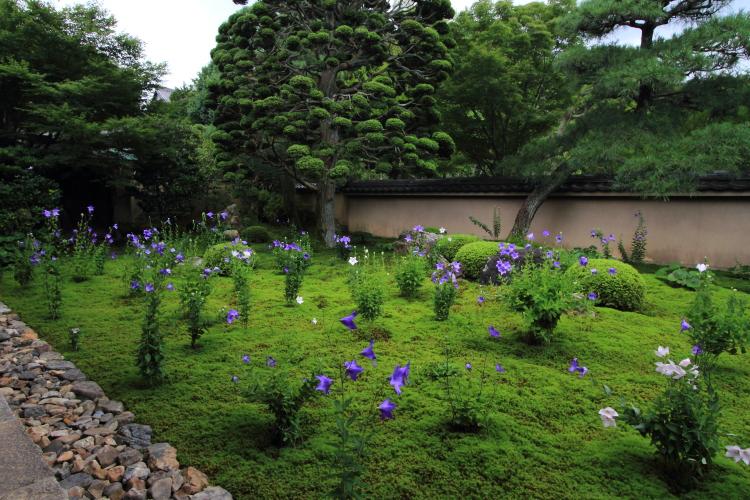 天得院(東福寺塔頭)_e0051888_200440.jpg