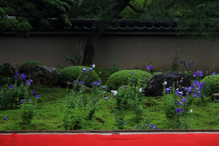 天得院(東福寺塔頭)_e0051888_2011594.jpg
