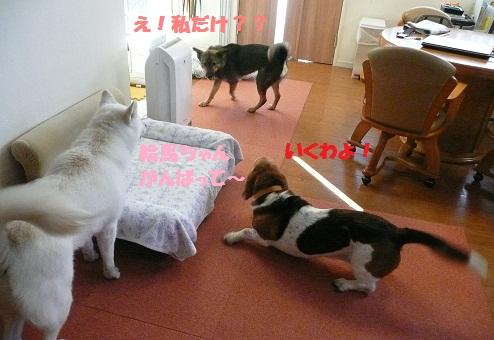 f0121712_16172415.jpg