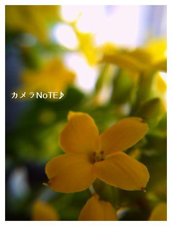 f0237012_22472131.jpg