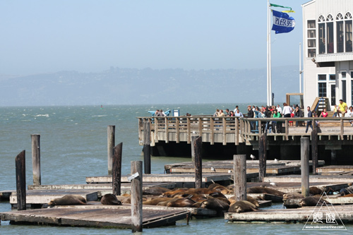 240 Fisherman\'s Wharf ~新婚旅行Day1~_c0211532_21394416.jpg