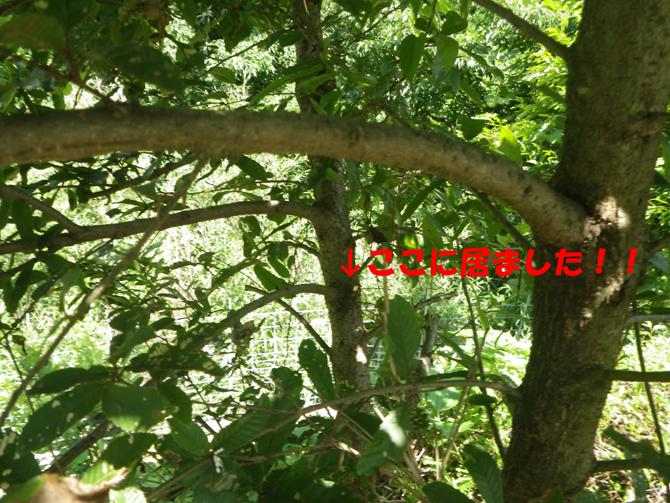 f0183484_16593865.jpg