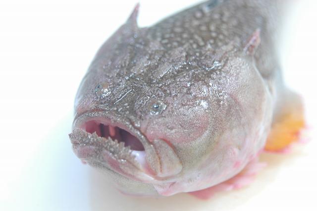 この魚は?_d0268290_75535.jpg