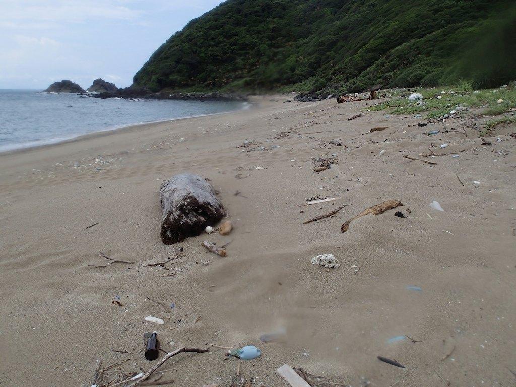 7/9 名瀬海域ウミガメ上陸痕跡調査_a0010095_10304951.jpg
