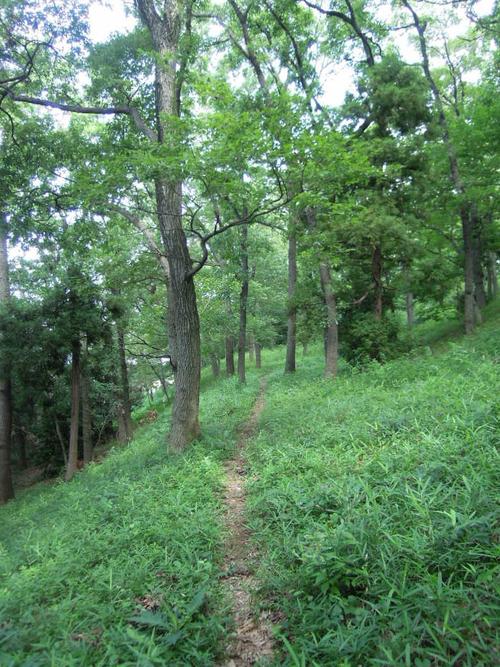 雑木林の中の小道_b0232005_18312636.jpg