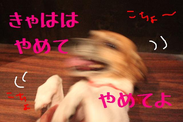 b0130018_1319291.jpg