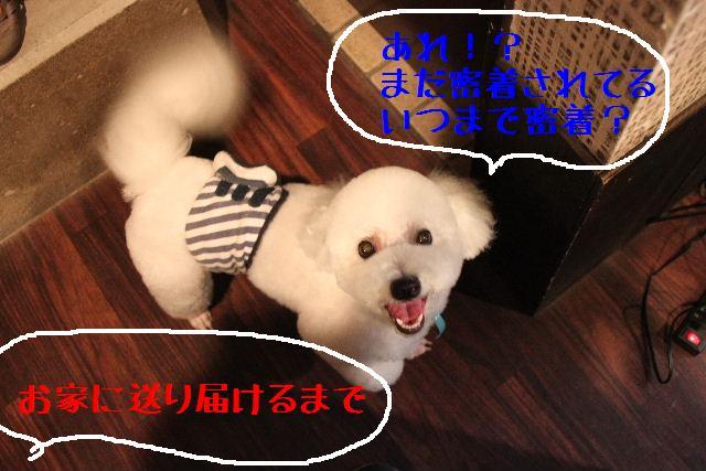 b0130018_1384694.jpg