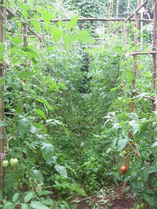 雨の前の「ガーデンふぁーむ」で☆_a0125419_11451297.jpg